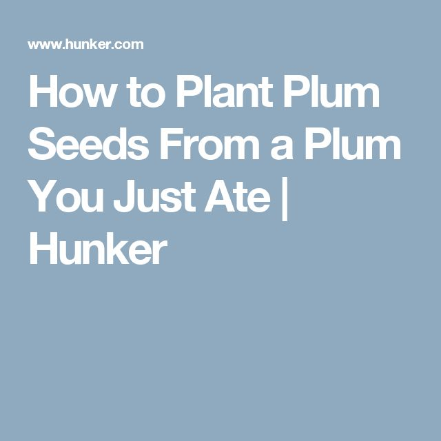 How to Plant Plum Seeds From a Plum You Just Ate | Hunker