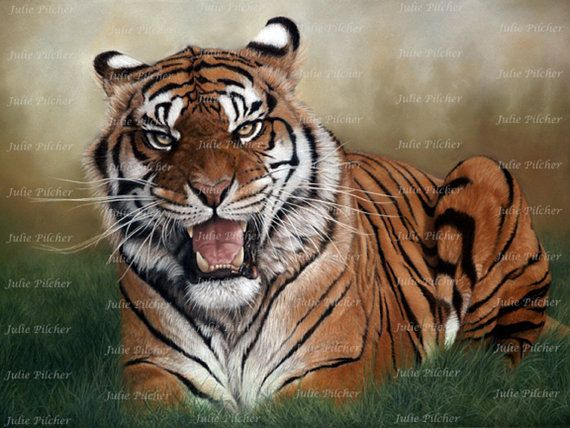 Instant Digital Download  8 x 6 Tiger  Art Print