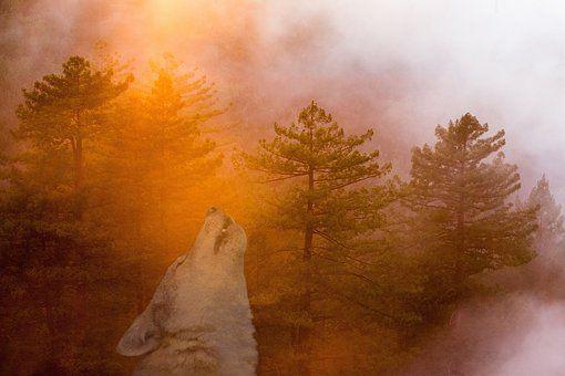 Mysticisme, Forest, Loup, Hurlement