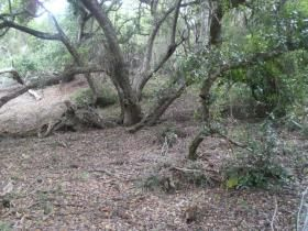 Vacant land / plot for sale in Brenton On Lake - Knysna