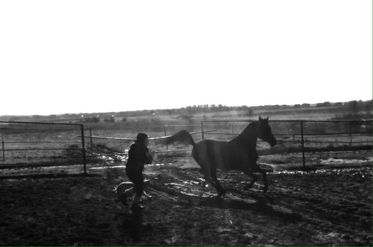 Child, Arabian Horse, Fun, Happy Running