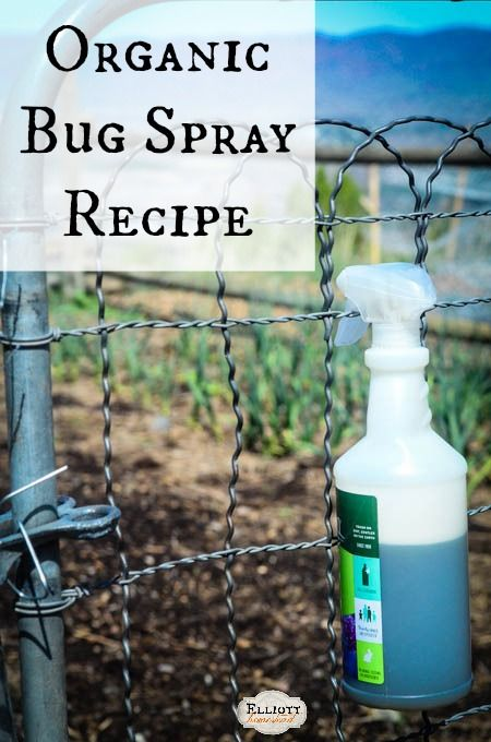 Organic Bug Spray Recipe