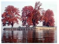 Char Chinar or Char Chinari or Rupa Lank, is an island in Dal Lake, Srinagar, Kashmir. The small islamd has four huge chinars on four corners, hence the name (Char=four).