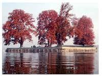 Char Chinar or Char Chinari or Rupa Lank, is an island in Dal Lake, Srinagar, Kashmir. The small islamd has four huge chinars on four corners, hence the name (Char=four).