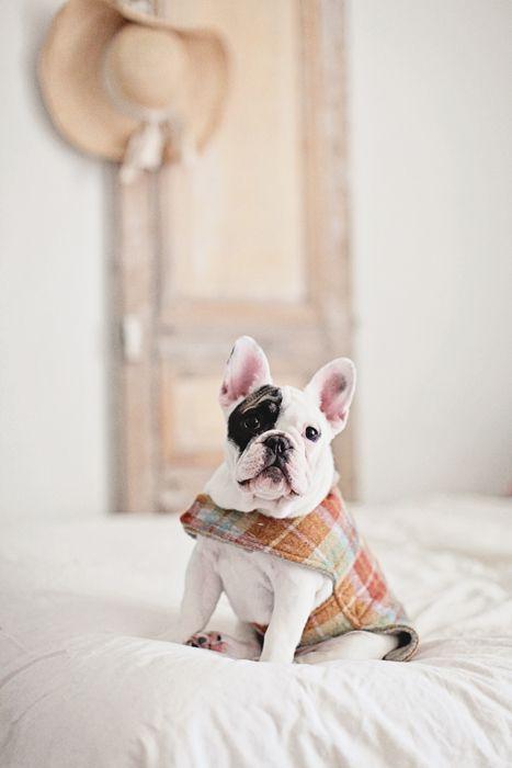 Weldon Wool Coat
