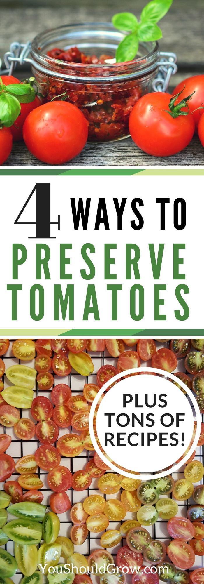 Do you have more tomatoes from the garden than you can eat? Find out how to preserve your crop so you never have to waste a garden fresh tomato again. Read to learn the 4 ways to preserve your tomatoes and tons of recipes to get you started. via @whippoorwillgar