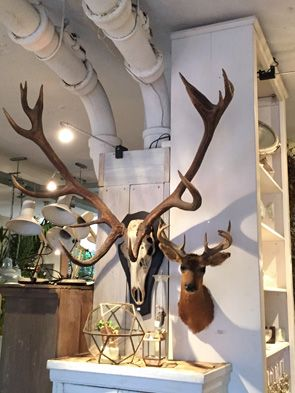 Weldaad amsterdam noordermarkt gewei wonen geweien for Decoratie hertengewei