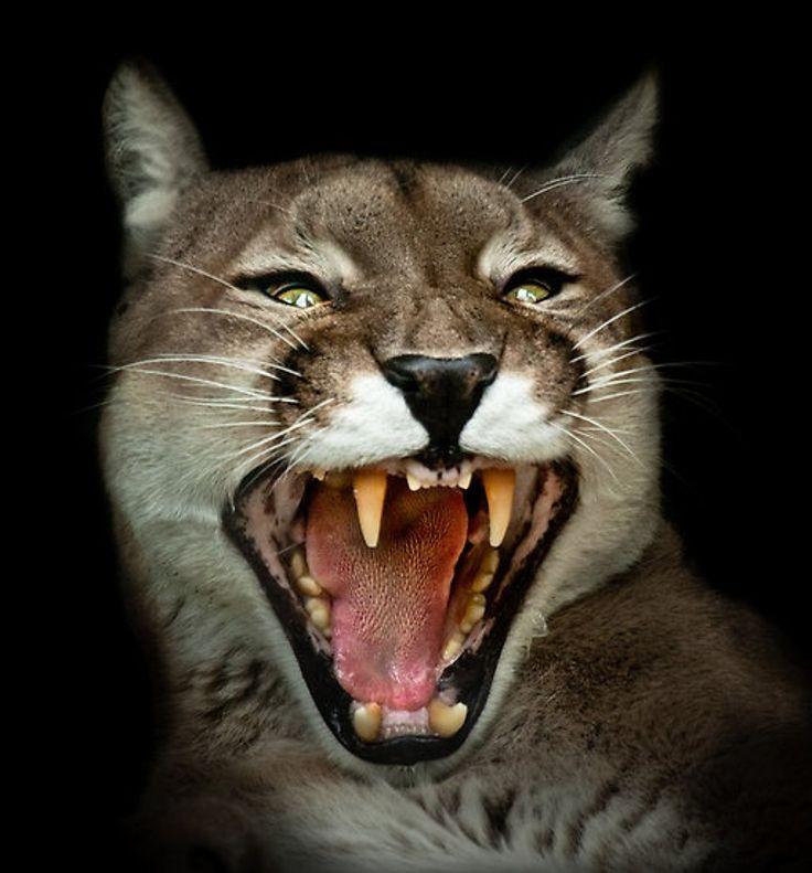 Top 10 Brilliant Wild Animals Photos By Natalie Manuela