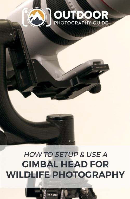 How to Setup & Use a Gimbal Head for Wildlife Photography