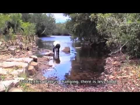 Located on the eastern shore of Australias tropical north, Shiptons  Flat is home to Marilyn, a Kuku Nyungkal Aboriginal woman, and her  family. She has been living here the ancestral way far removed from the  services and conveniences of modern life as part of the sublime  performance of nature. Like her ancestors before her, Marilyn walks  through the Nyungkal bubu, the Nyungkals country, acknowledging and  conversing with the Spirit beings around her