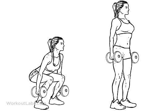 Dumbbell Squat Gym Dumbbell Squat Squat Workout I