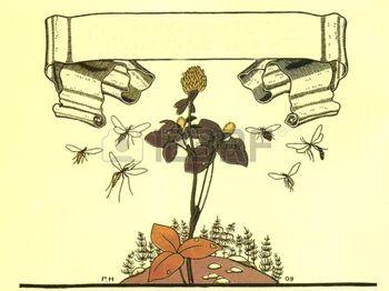"""fiori e insetti - Illustrazioni di Gregory racconto popolare russo Narbut """"Mansion"""", editore Joseph Knebel, Mosca, 1910 photo"""