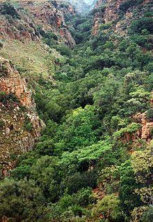 Magaliesberg - Wikipedia, the free encyclopedia      Tonquani Kloof