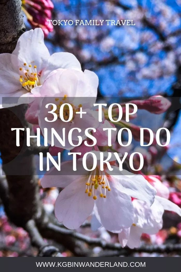 30 Things to Do in Tokyo, Japan