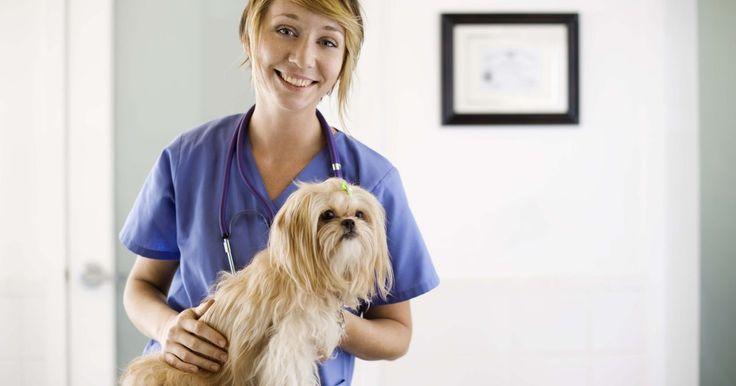 Sinais de infecção em mordida de cachorro. Mordidas de cachorro são perigosas e traumáticas, resultando em uma grande possibilidade de infecção — especialmente se a mordida não for tratada. A saliva de um cachorro tem uma grande diversidade de bactérias. Em quase 100% das mordidas caninas, bactérias prejudiciais e outros patógenos perigosos estão presentes e podem ser transmitidos à ...