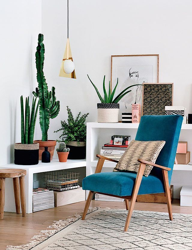 Mix tall and short plants to make a cool focal area in your home