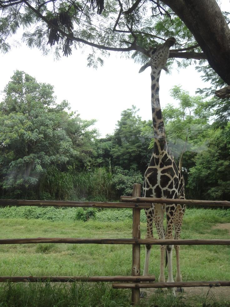 Bali Safari and Marine Park. Bali.