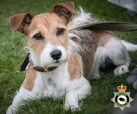 Inspector Barnaby Hund
