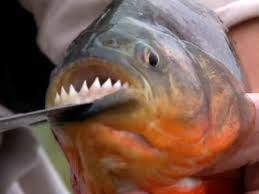 Image result for scary fish