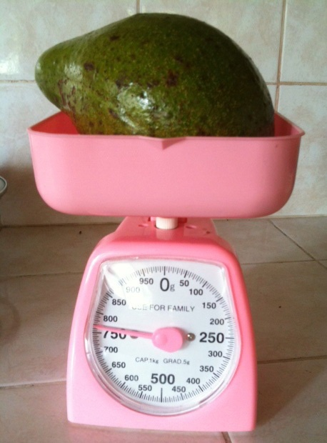 The biggest avocado from our garden.