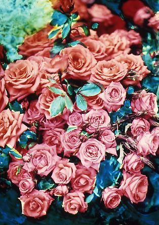 David LaChapelle: Colour, Roses Colorful, Lachapelle Flowershop, Amazing Color, Pink Roses David, Beautiful Flowers, Lush Roseperfection, Beach Wedding