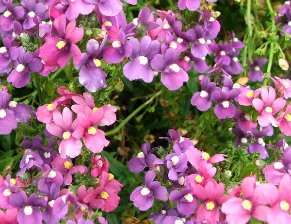 Image Result For Amarillo Flower Shops