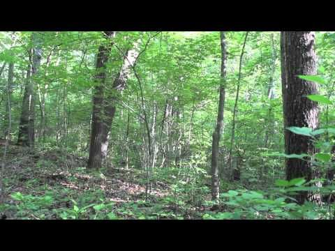 Screaming sounds in the woods, rocks thrown at camera - Georgia, 2013 - YouTube