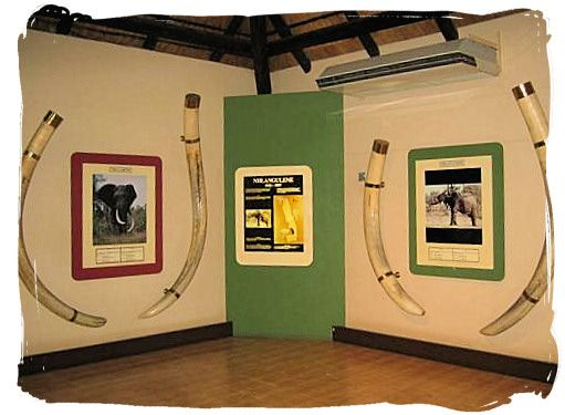 Elephant Hall of fame at the Letaba camp.
