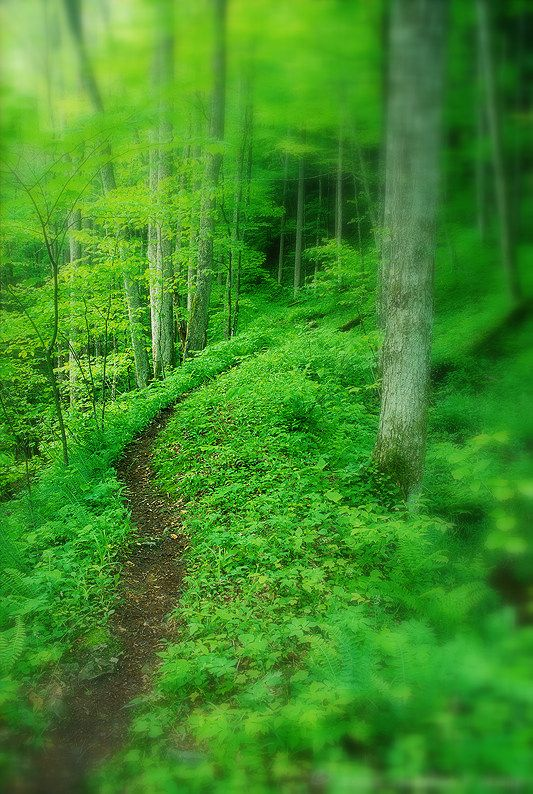 Winding Trail – Otter Creek Wilderness located in the Cheat-Potomac Ranger District of Monongahela National Forest in West Virginia.