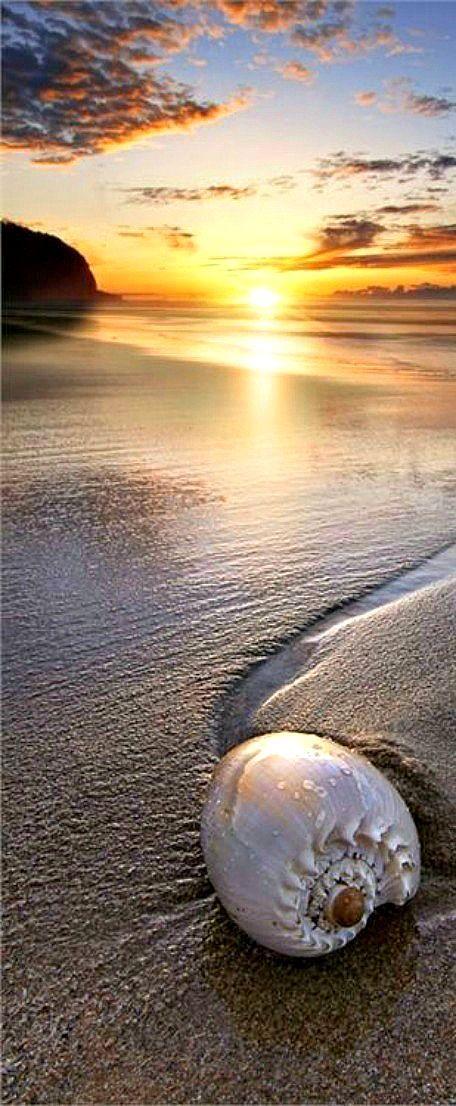 sea shell.. ♪ ♫ ♩ ♬