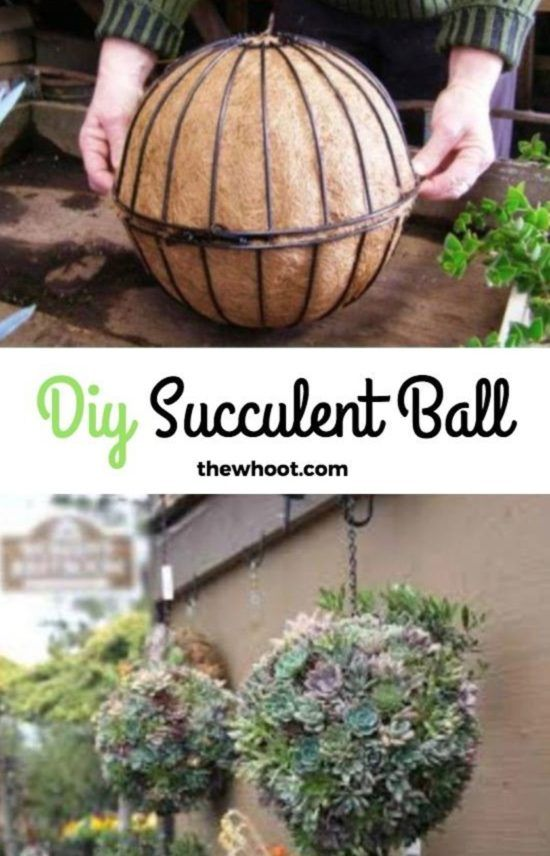Succulent Sphere DIY Is Your Next Project | The WHOot