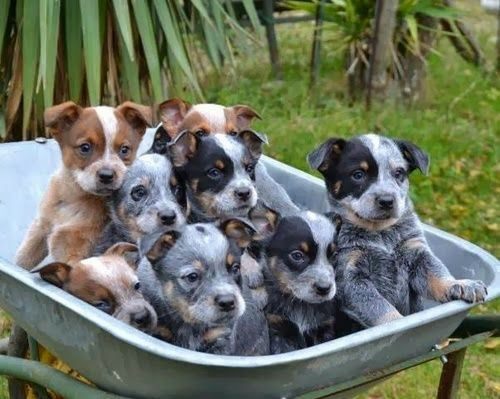 Puppies by the pan how cute. ~ Cute puppy and dog