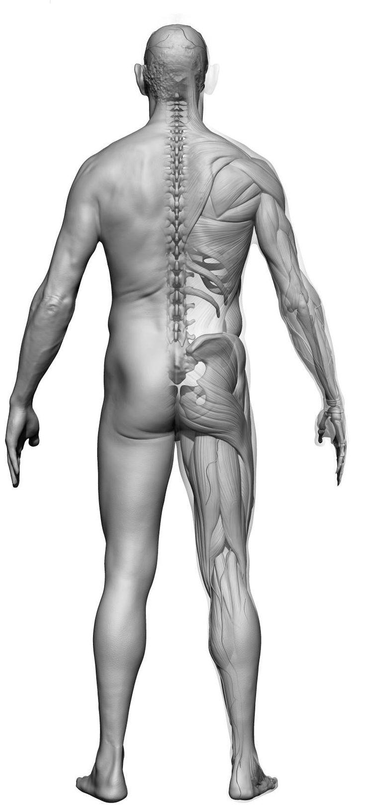 82 besten 3D Scans Body Bilder auf Pinterest | Anatomieverweis ...