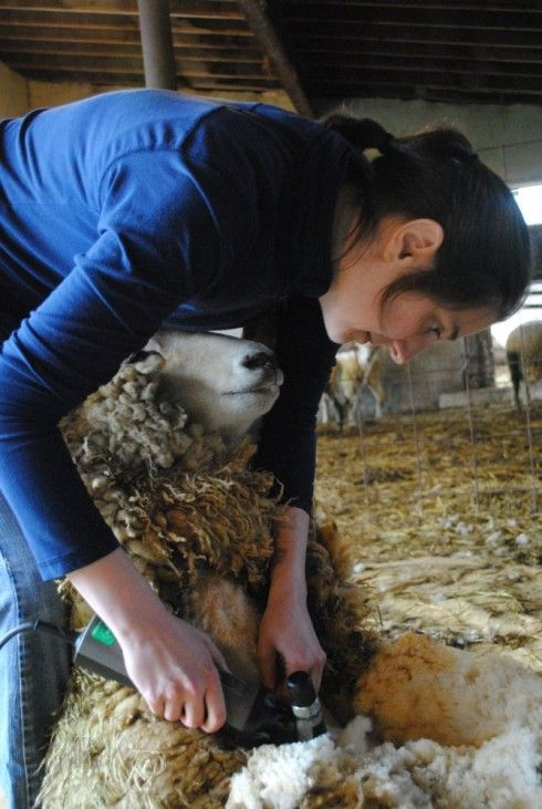 If you've ever met Emily Chamelin, our shearer, you're probably as much in love with her as I am. Every single time I watch her shear, I'm astonished by her strength, skill, and conscientious respe...
