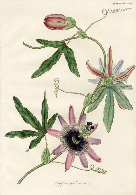 Les 402 meilleures images du tableau herbarium sur for Botanic fleurs artificielles