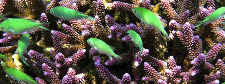 peces verdes