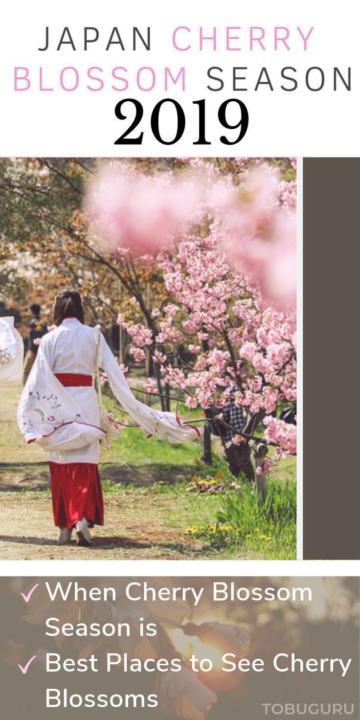 Japan Cherry Blossom Season 2019 Tobuguru Japan Travel Japan Cherry Blossom Season Japan Travel Japan