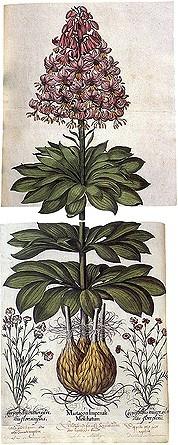 Vintage Botanica!