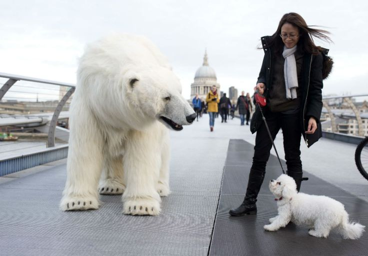 Polar bear in Central London for a PR stunt