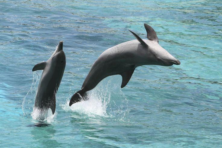 Take an excursion to see dolphins and other wildlife in Pensacola Bay. Pensacola Beach, Florida. #ExplorePcola