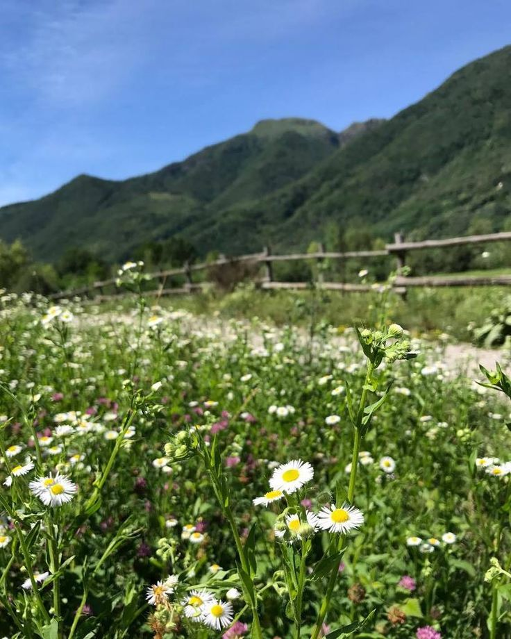 RT @ClarissaVintage: No filter needed in my Paradise #springinlombardia #ippoviadellavalsassina #valsassina #camomilla #chamomile #moun https://t.co/HkGTNLjyui