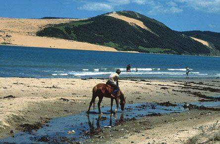Horse riding at Hokianga Harbour, Northland, New Zealand #NZ