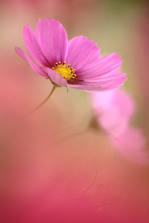 Roze echt een mooie meisjes kleur.