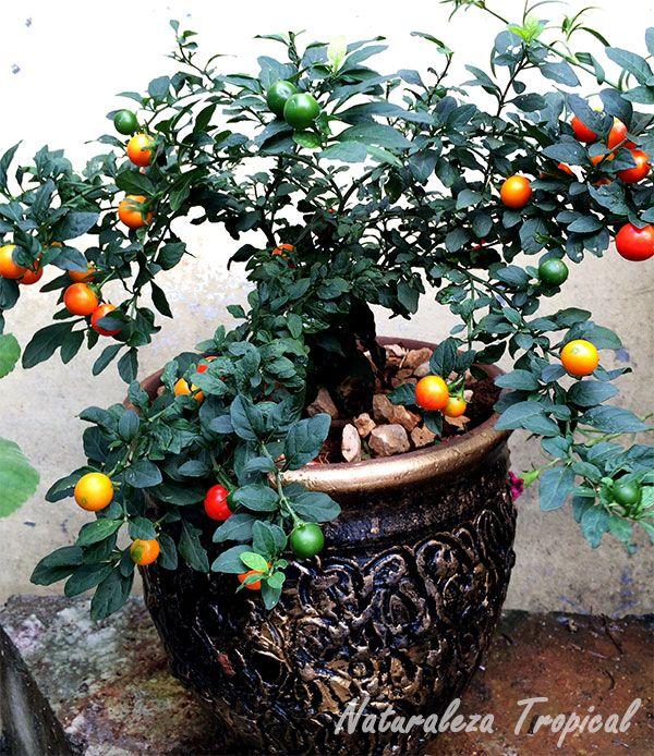 mejores 306 imágenes de plantas en pinterest   plantas, suculentas