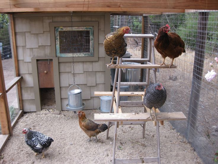 chicken coops | Floor Space for Chicken Coop and Runs - Raising Chickens - coop design ...