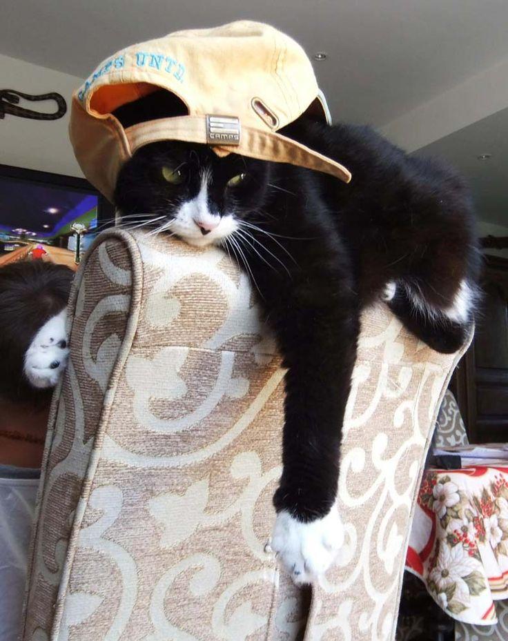 chats insolites | Photos de chats rigolos ou insolites 2