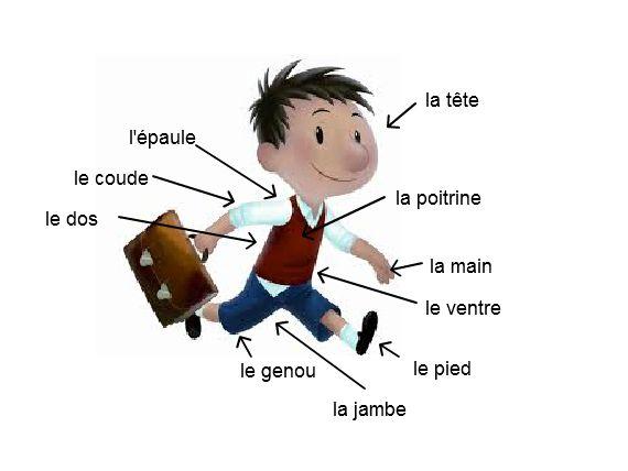Części ciała (Les parties du corps)