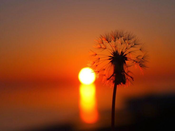 Il tuo saluto, la sera, gli occhi nell'ombra - dall'ombra, e taci, mi guardi, un minuto? - ferma ogni vena nel mondo, tacito aduni gli addii della sorte, la sera, con gli occhi nell'ombra, ardi? O piangi, ma forte ma forte un minuto nel cuore ogni vena mi ferma il tuo saluto, la sera.  Sibilla Aleramo  http://tiziana-laterradimezzo.blogspot.it