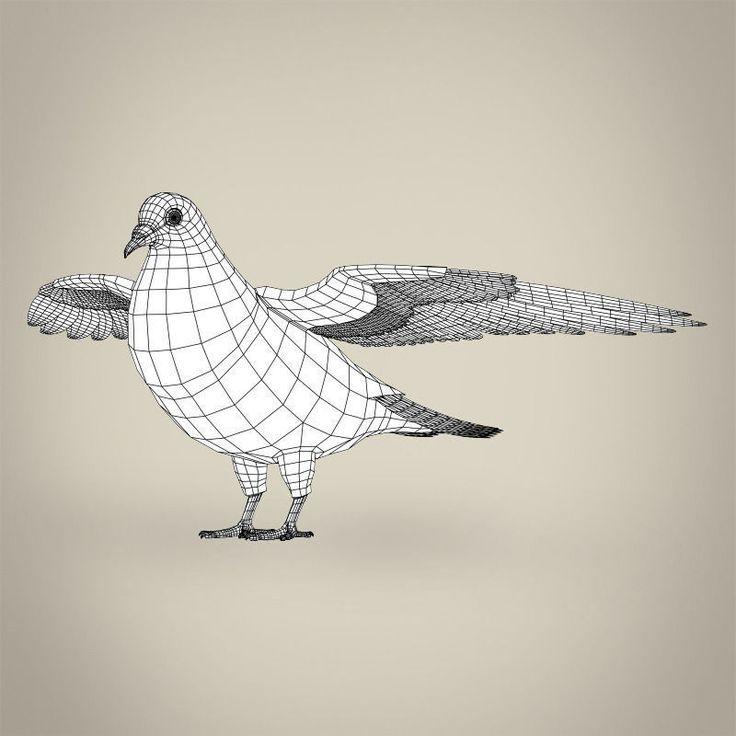 realistic-pigeon-3d-model-low-poly-max-obj-3ds-fbx-c4d-lwo-lw-lws.jpg (800×800)