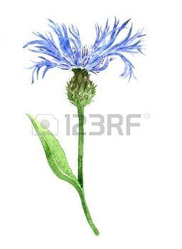 A 17 legjobb tlet a k vetkez r l dessin fleur a pinteresten comment dessiner une fleur - Coloriage fleur bleuet ...